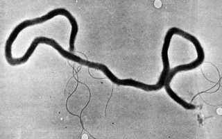 Современные методы лечения сифилиса и его профилактика
