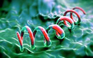 Анализ ИФА на сифилис: расшифровка, положительный, сколько делается