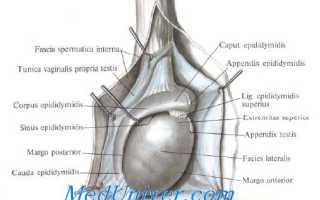 Боль в яичке у мужчин причины, лечение, профилактика